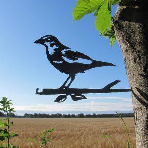 Birdwise merel
