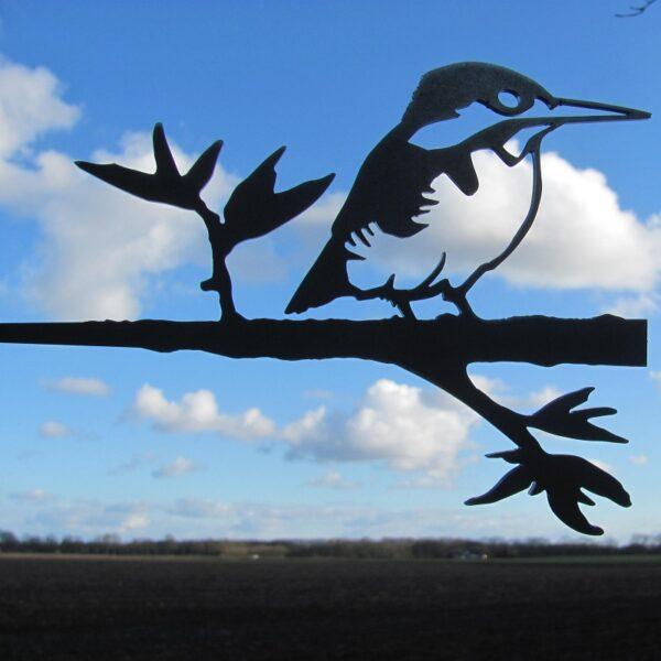 Birdwise IJsvogel