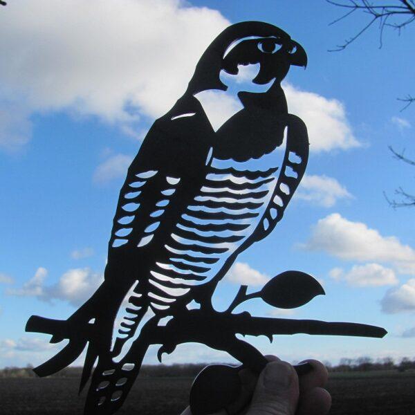 Birdwise slechtvalk